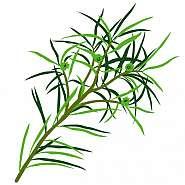 Tea Tree Ulei Esential