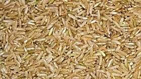 Pudra proteica din orez brun