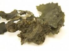 Alge marine irish moss