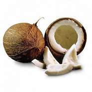 Palmier de cocos