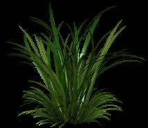 Ulei de lemongrass