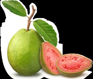 guava frunze pierde în greutate