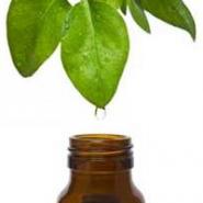 Ulei de Ceai Verde